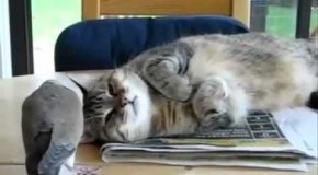 Watch: The Most Understanding Cat in the World….